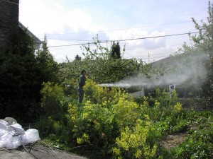 WSDA workers spray organic garden after ripping protective cover away.